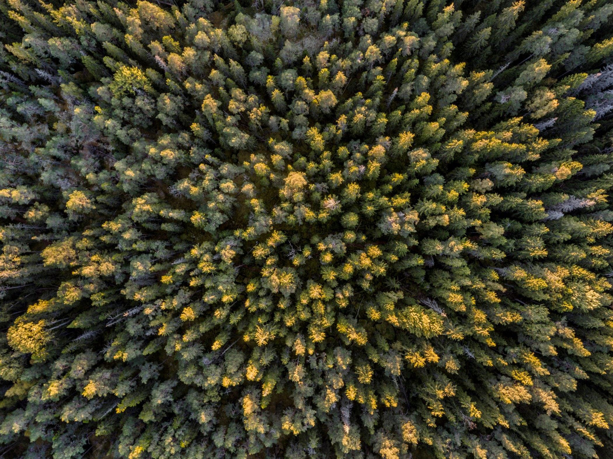 Col·labora a frenar la tala il·legal d'arbres