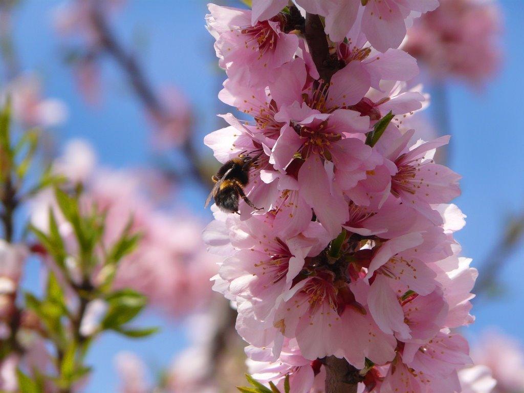 Jornades forestals de primavera