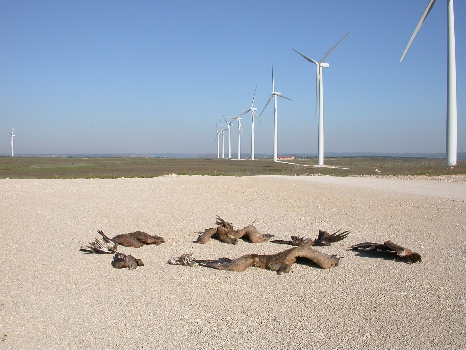 Un parc eòlic amenaça les aus de Monfragüe. Campanya de signatures