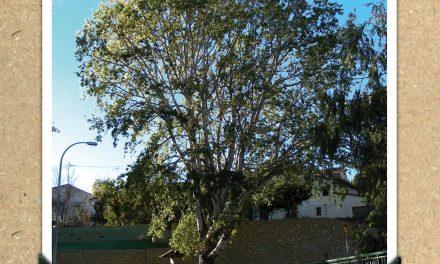 Àlbers blancs del Pont de La Torre de les Maçanes