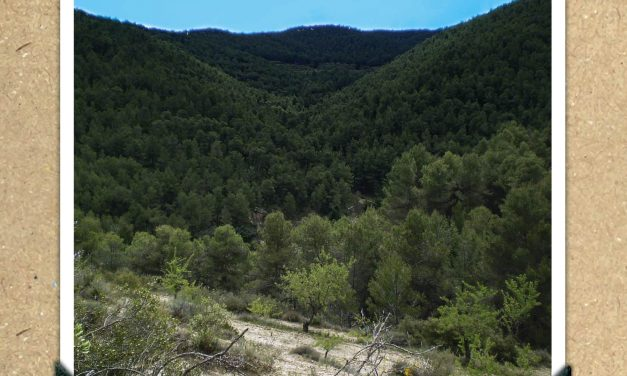 Fleixos del Barranc d'Horta de La Torre de les Maçanes