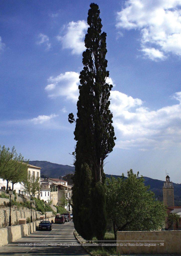 Xiprers del Calvari de La Torre de les Maçanes