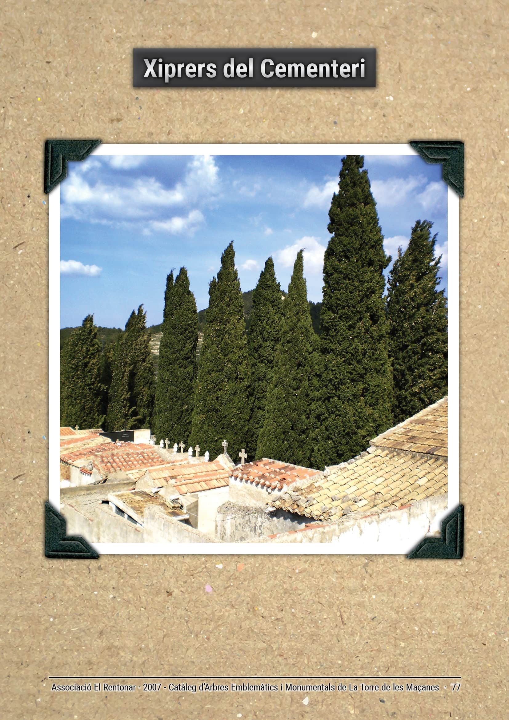 Xiprers del Cementeri de La Torre de les Maçanes